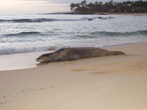 Hawaii Around Kauai 12-2005_29